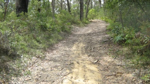 Fire Trail 500 metres easy going